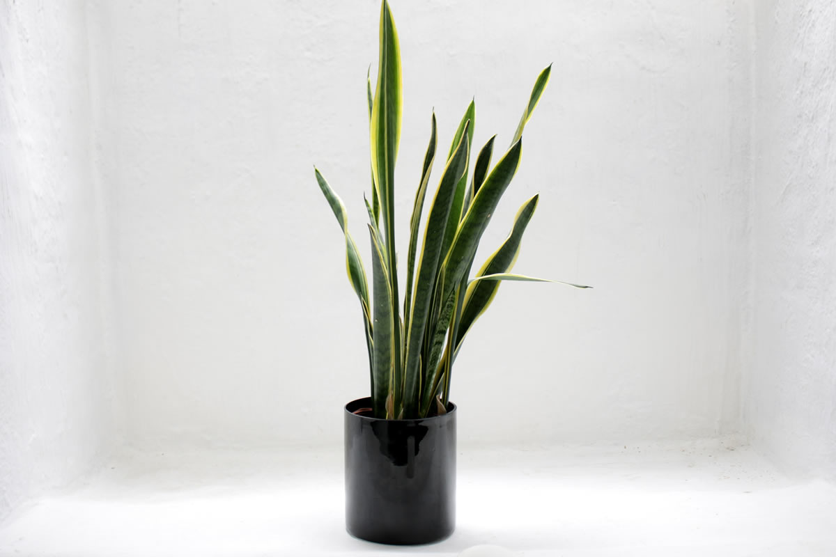 5 Indoor Plants You (Probably) Can't Kill