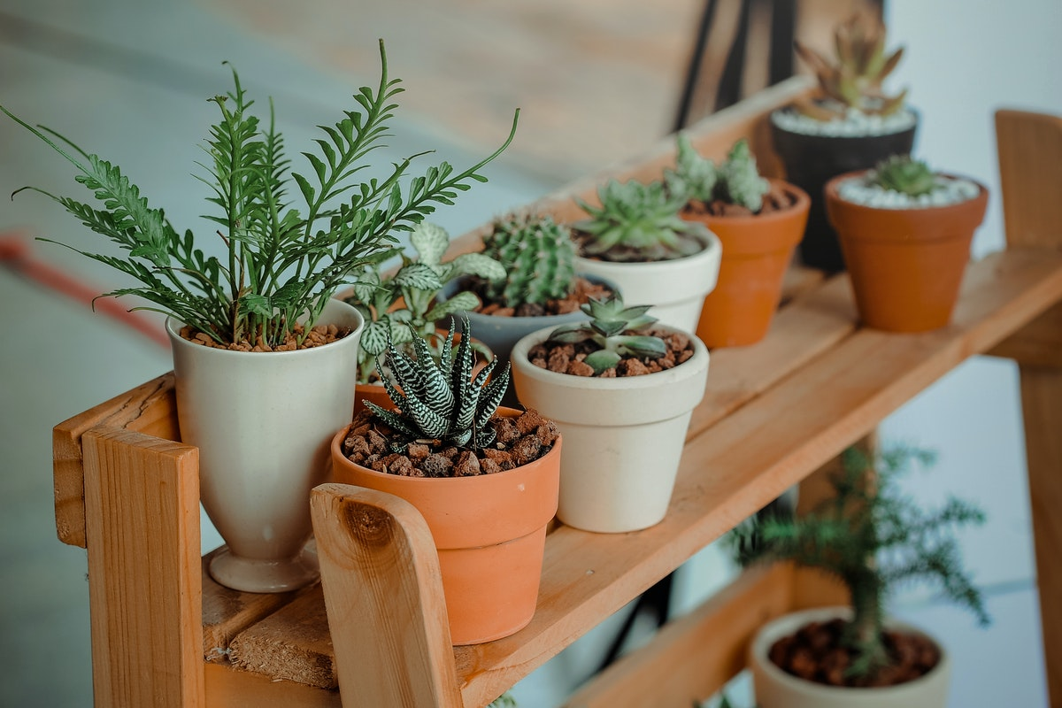 Five House Plants that Are Easy for Apartment Owners to Maintain